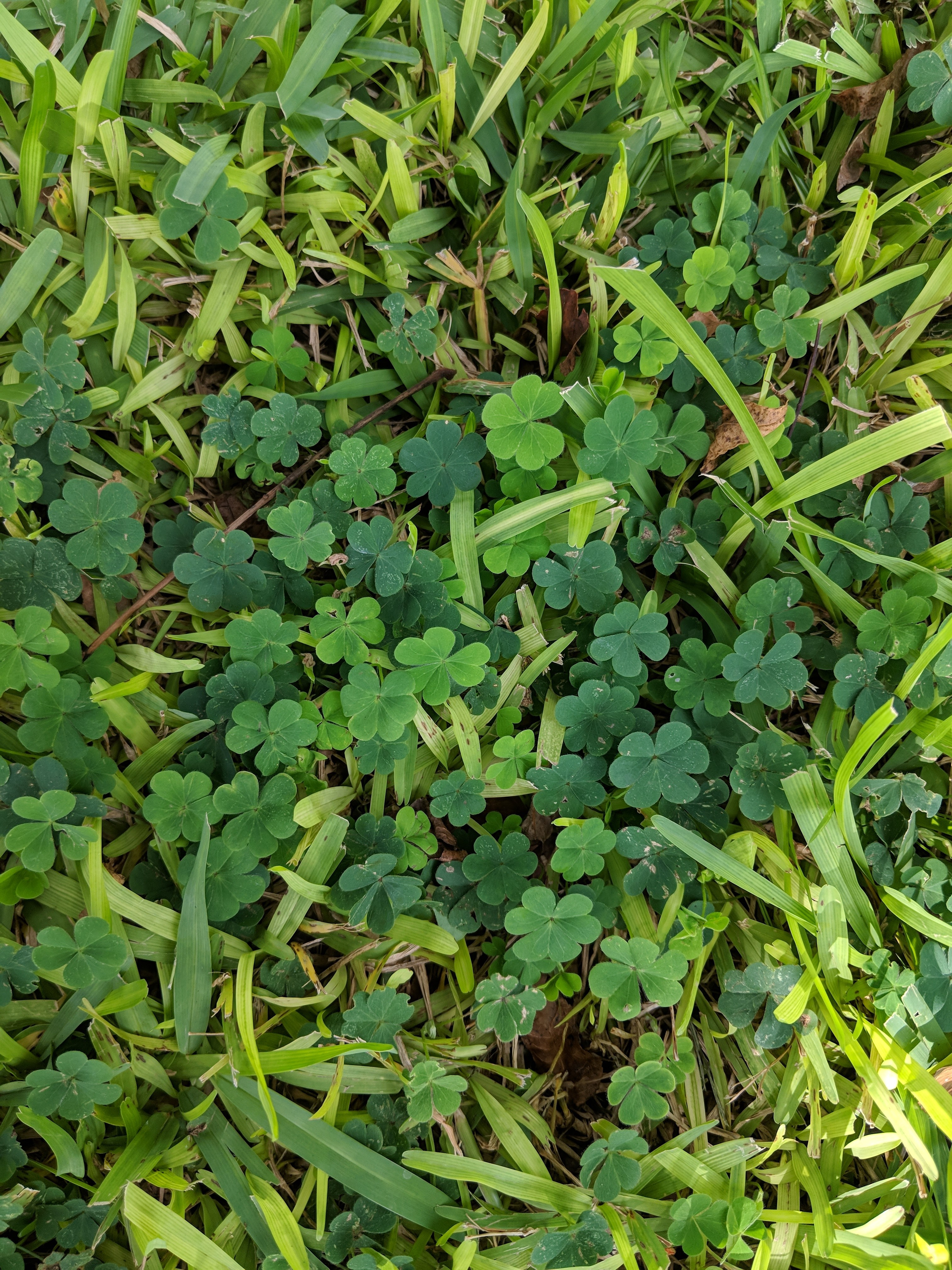 Weed Identification And Questions About Weed Control Lawn